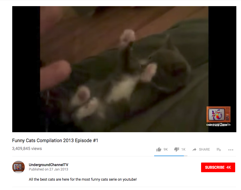 viral cat video 3 million views